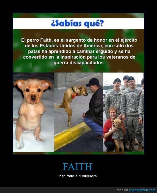 discapacitado,inspiracion,perro,soldado