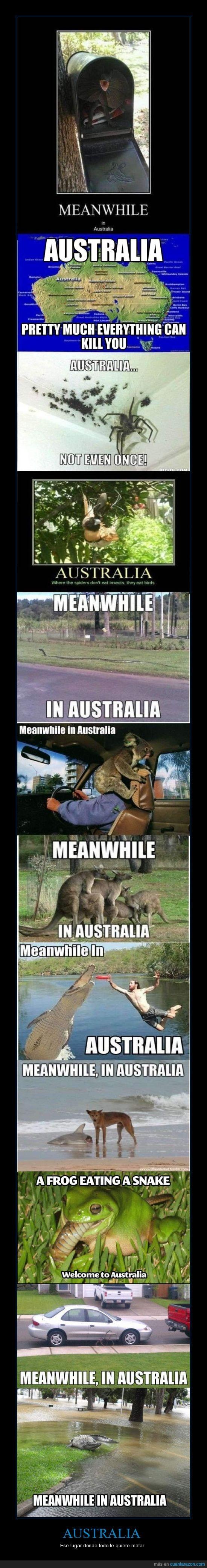 animales,araña,australia,charco,cocodrilo,comer,gigante