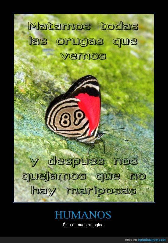 humanos,logica,mariposa,orugas