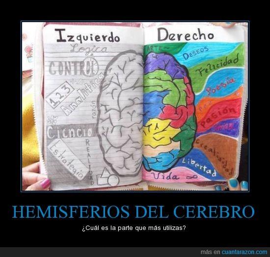 cerebro,derecha,hemisferios,izquierda,parte,utilizar