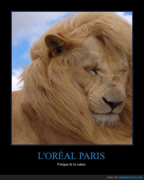 felino,leon,loreal,majestuosa,melena,paris,pelazo