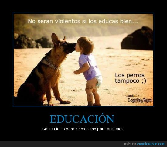 animales,básica,educación,educar,niños,perro,perros,violencia,violentos