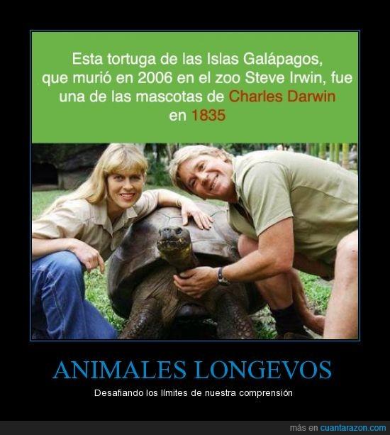 animales,charles darwin,curiosidades,darwin,tortugas más viejas que mutenroshi