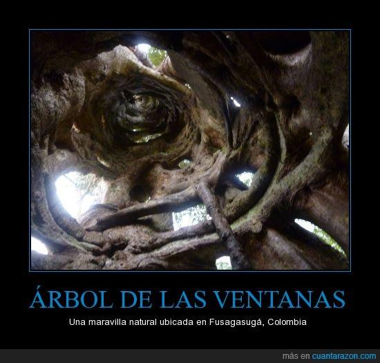 Arbol,Colombia,hueco,tronco,ventanas