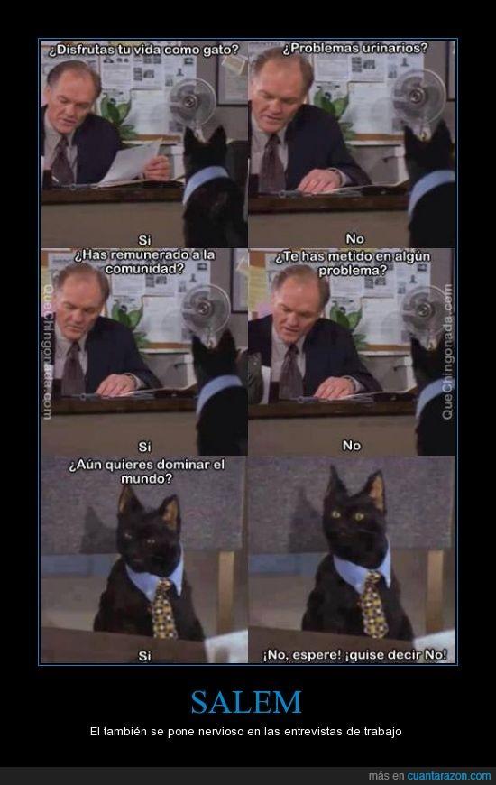 dominar,entrevista,gato,mundo,sabrina,salem