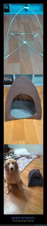 casa,es para chihuahuas que no salen,grande,no cuadra,pequeño,perro,tamaño