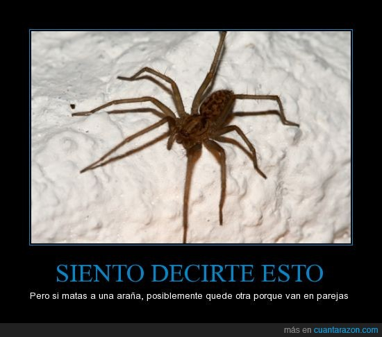 araña,arañas,ejército,hay una atrás de la pantalla,invasión,matar,venganza
