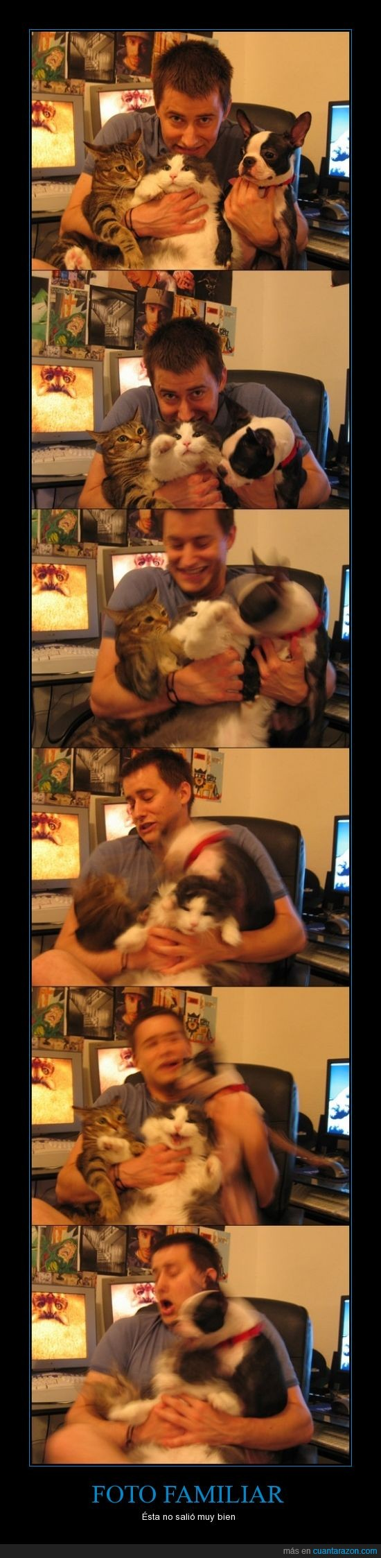 atacar,desastre,familia,foto,Gatos,hombre,mover,perro