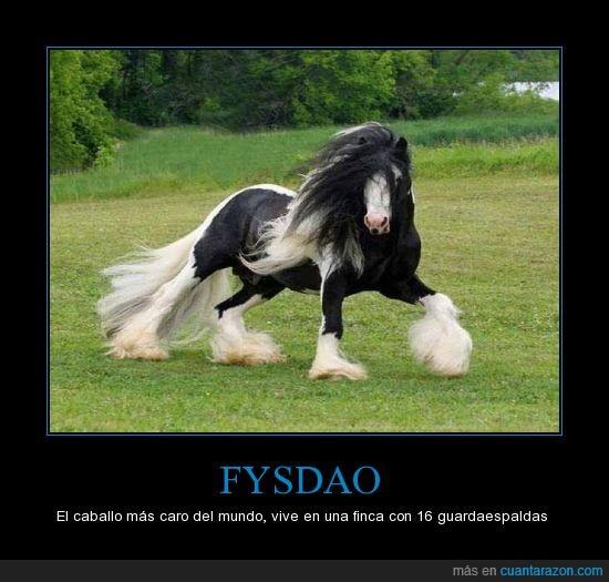 blanco,caballo,caro,curiosidad,dinero,Fysdao,guardaespaldas,negro,pelo pantene