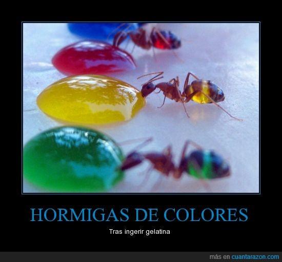 colores,criatura del inframundo,gelatina,hormigas,insectos