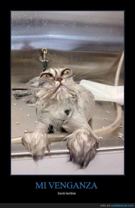 alien,gato,lavar,mojado,ojos