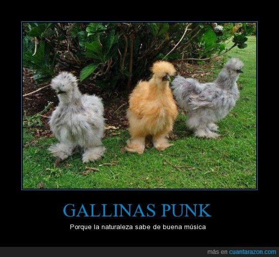 gallinas,general kentucky,naturaleza,no reggaeton,punk,ramones,tienen buen gusto