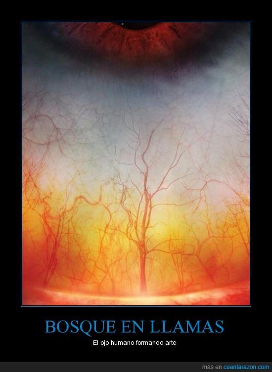 arte,bosque,fuego,humano,llamas,ojo