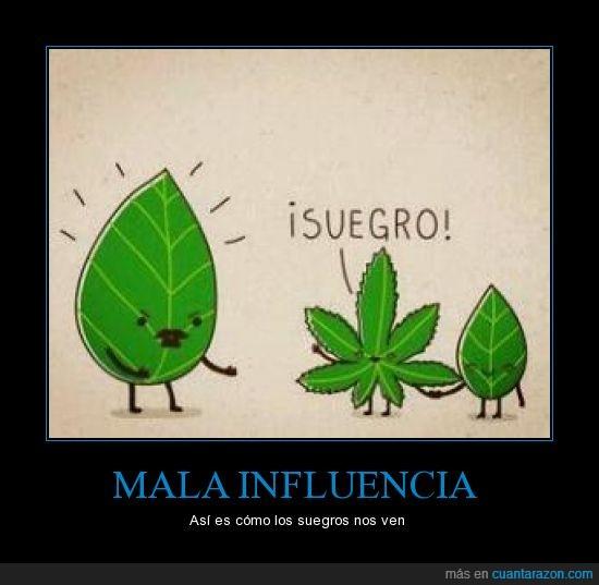 hoja,Marihuana,planta,suegros