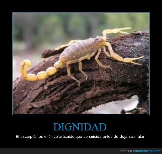 dignidad,escorpion,suicidarse.