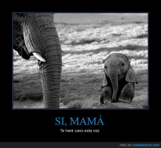 Elefante,Mamá,Obedecer,Regaño