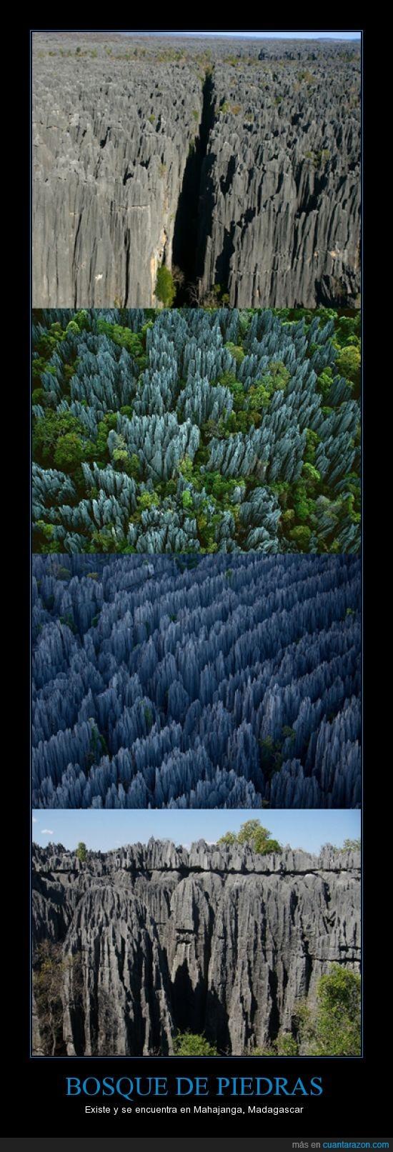 Bosque,Caliza,Erosión,Madagascar,Piedras
