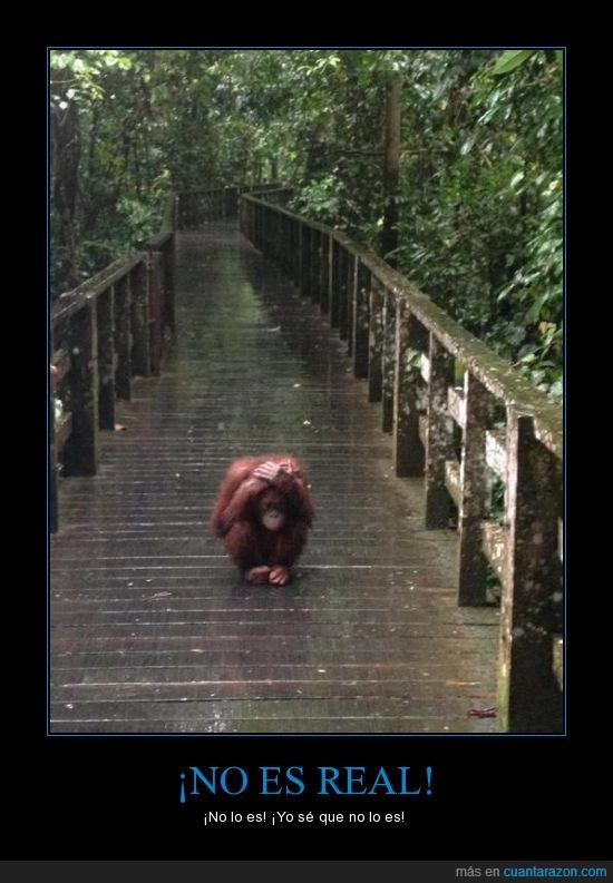 asustaado,orangutan,pesadilla,puente,real,solo