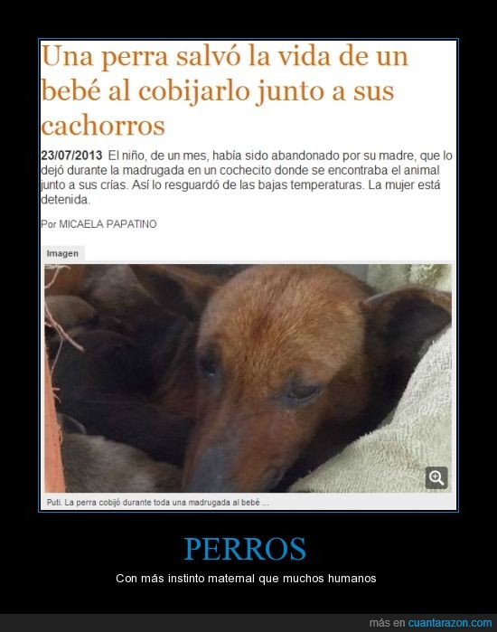 cachorros,madre,perra,rescate,salvar la vida