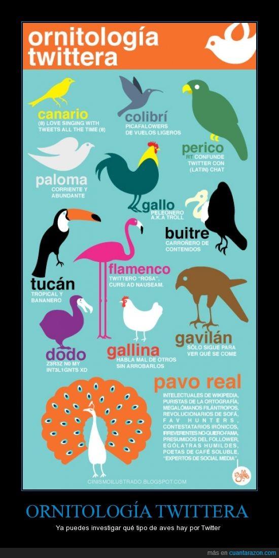 ornitología,pájaros,tiene sentido,twitter,¿cual es el tuyo?