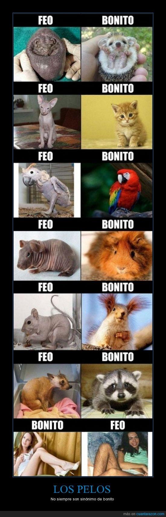 bonitos,feo,gato,Guacamayo,pelos,peludo,raton