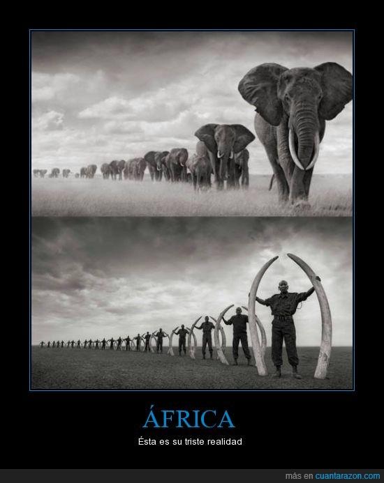 África,Extinción,Marfil,Realidad