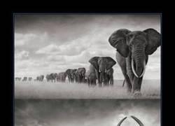 Enlace a ÁFRICA