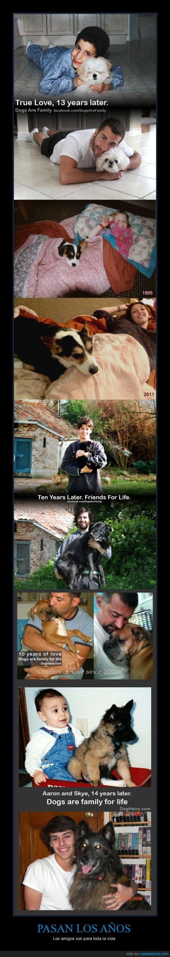 amigo,crecer,niño,perro,tiempo
