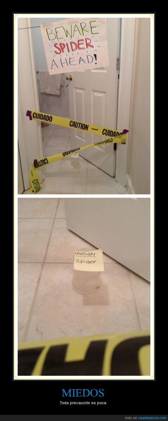araña,baño,cuidado,danger,escena,exagerar,peligro,vaso