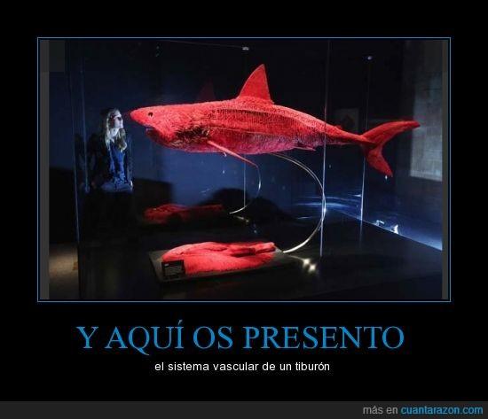 presento,sangre,sistema vascular,tiburon,vena