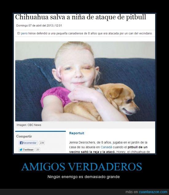 ataque,defender,heroe,no debo llorar,perro,salvar