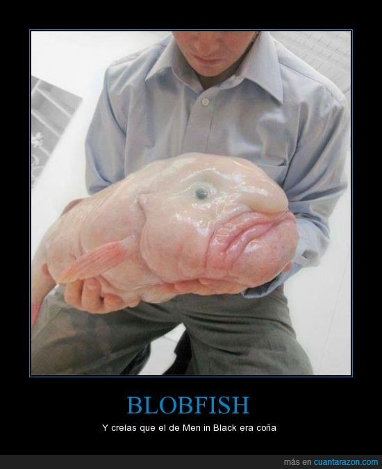 blobfish,men in black,nariz,pez,raro