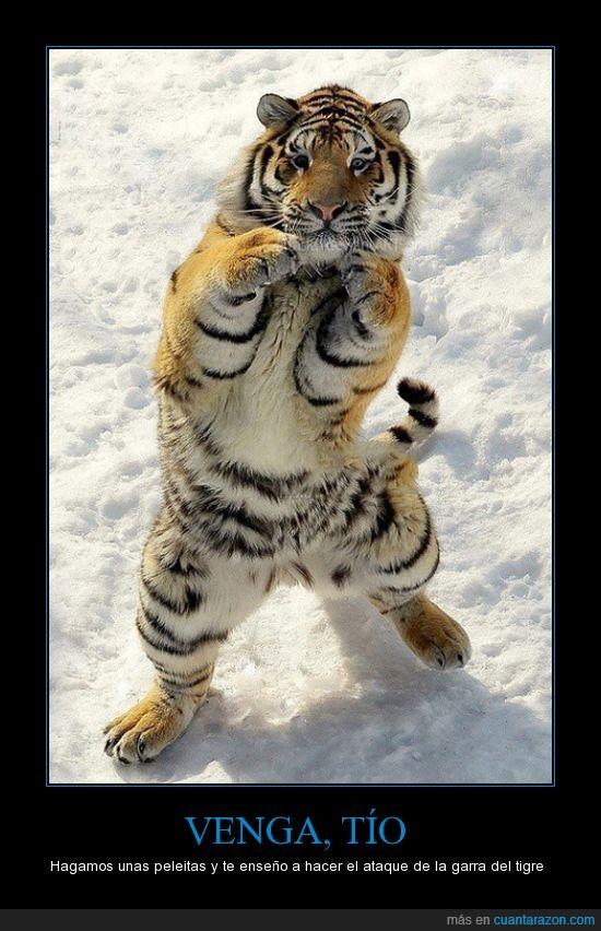 parada,pelea,tigre