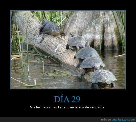 cocodrilo,dia,dia 23,dia 26,dia 29,ejercito,tortugas,venganza