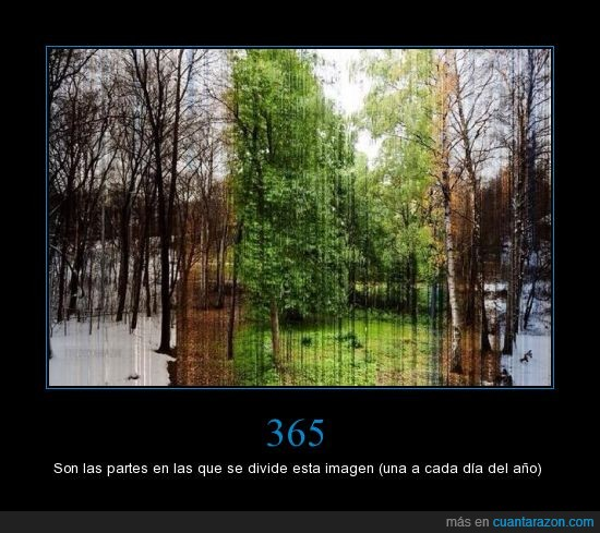 año,árbol,invierno,natulareza,natural,nieve,otoño,partes,primavera,raro,verano