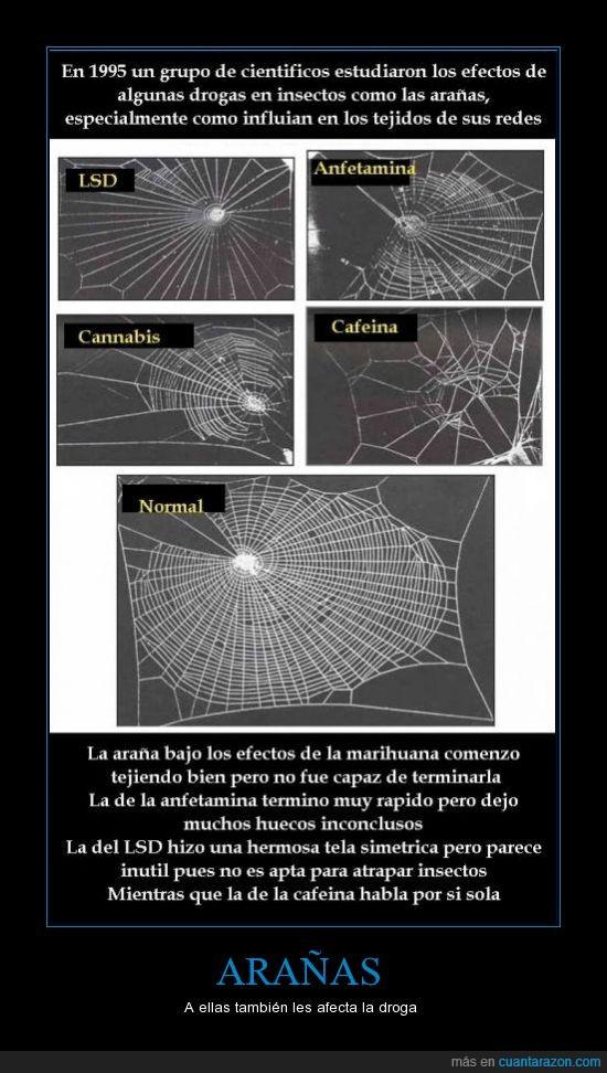 1995,anfetamina,araña,cafeina,canabis,droga,lsd,marihuana,superbuffon,taringa