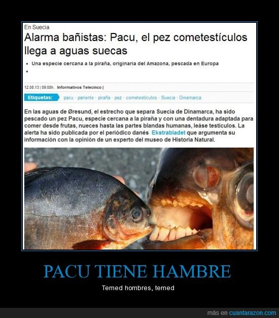 comer,morder,pacu,pez,testiculos