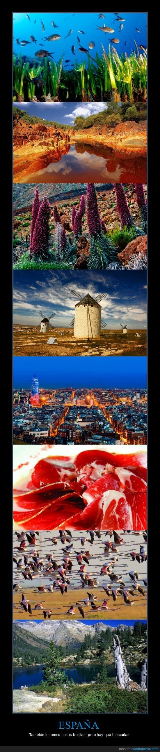 España,flamencos,jamón,molino,paisajes,peces,rio tinto,tajinaste