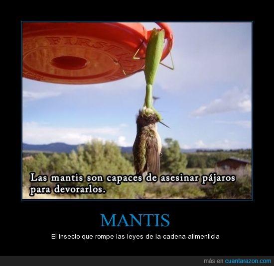 leyes,mantis,romper