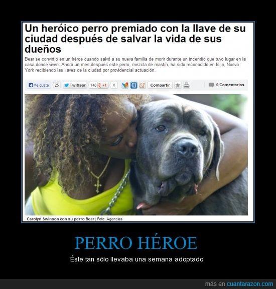 galletas caninas,guauguau,héroe,perro,pluto,rex el perro bombero