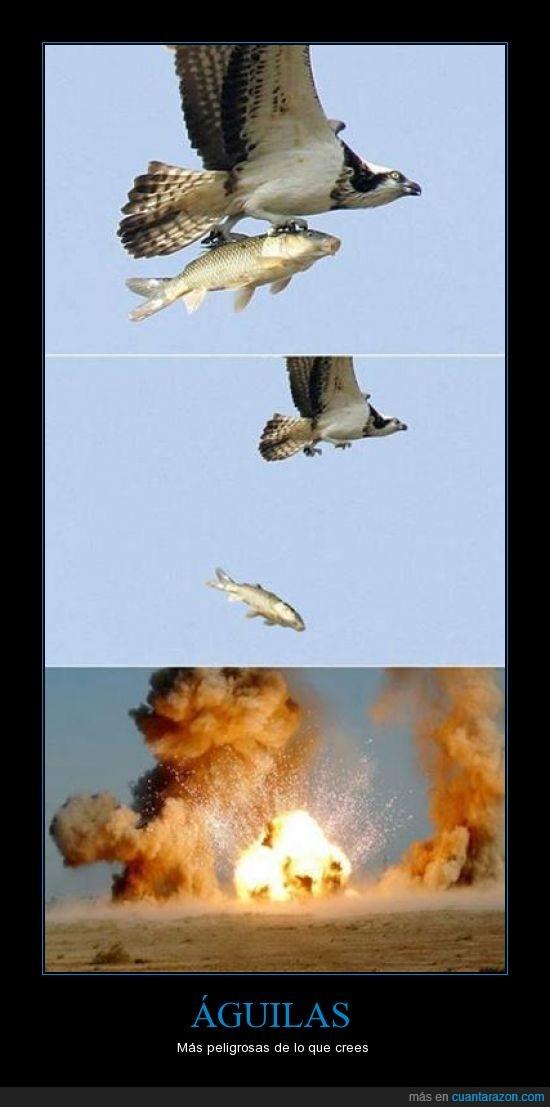 aguila,ataque,atomico,explosion,mejores que las del titanic,pez