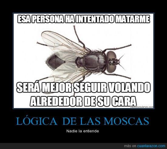cara,gigante,intertar,logica,matar,mosca,volar