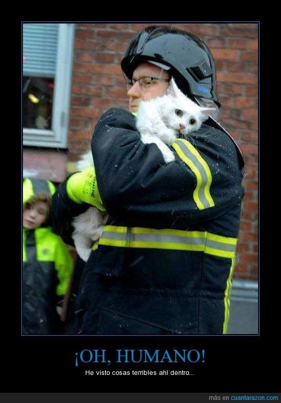 bombero,cosas terribles,gato,Humano,incendio,miedo