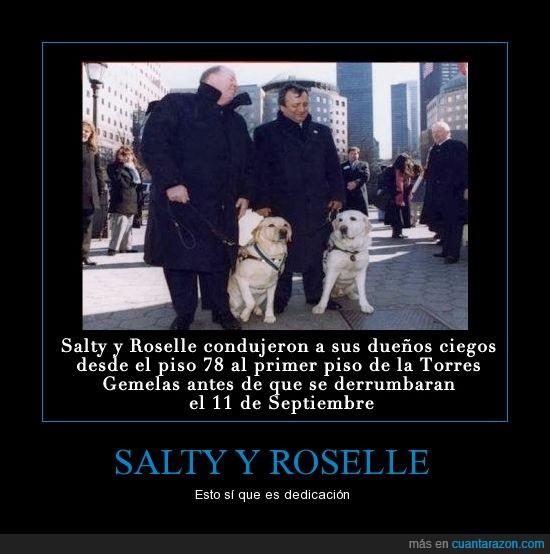 11-s,ciegos,dueño,lazarillo,once,perro,roselle,salty,salvar,septiembre,torres gemelas