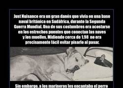 Enlace a JUST NUISANCE
