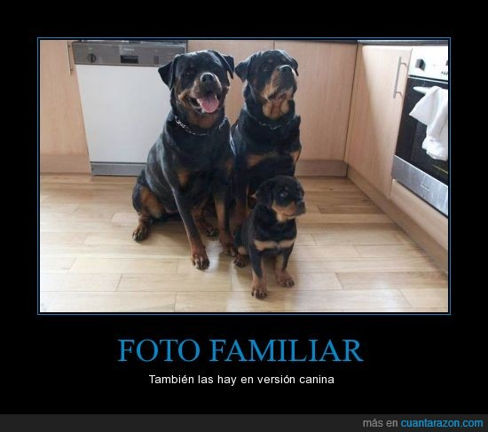 familia,foto familiar,perros,rottweiler