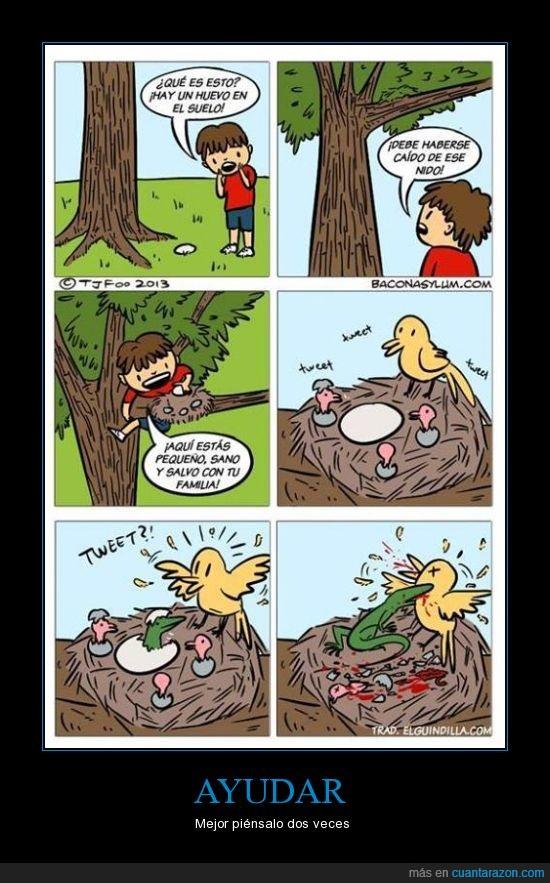 ayuda,consecuencias,huevo,lagarto,nido,pajaro,pensar