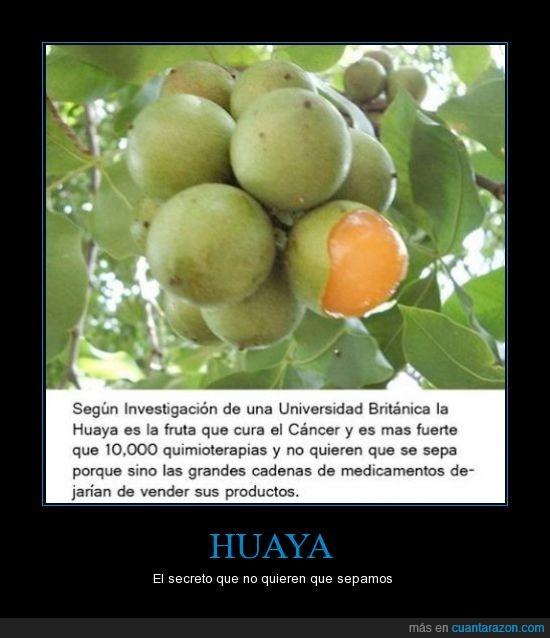 cancer,curar,frut,Huaya