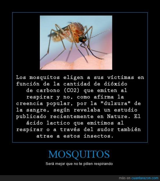 co2,mosquitos,Nature,picaduras,respirar,sangre,sudor
