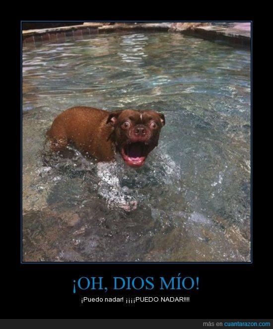 perro asombrado,perro flipao,perro nadador,sorpresa perruna